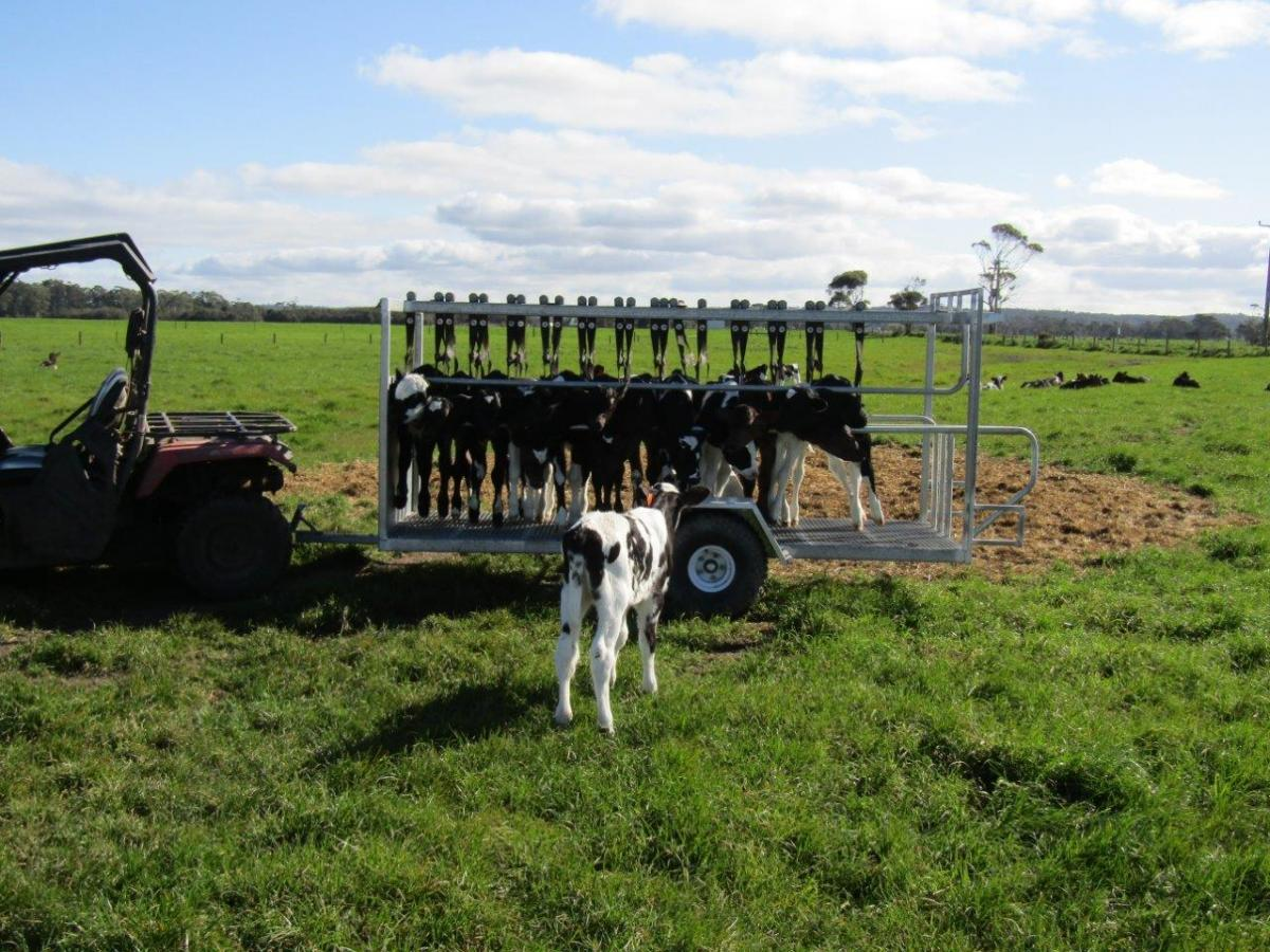 Dairy Calf Transport