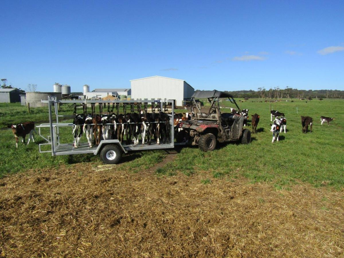 Calf trailer in paddock.jpg
